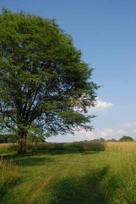 blue sky, clouds, field, grass, grass path, grass trail, trail, trees, My Favorite Pictures