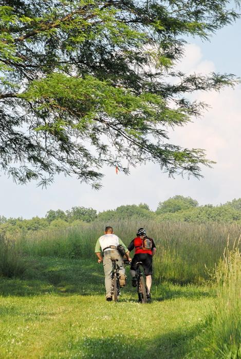 trail, grass trail, trees, grass, field, mountain bike, mountain biking
