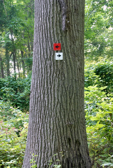tree, trail markers