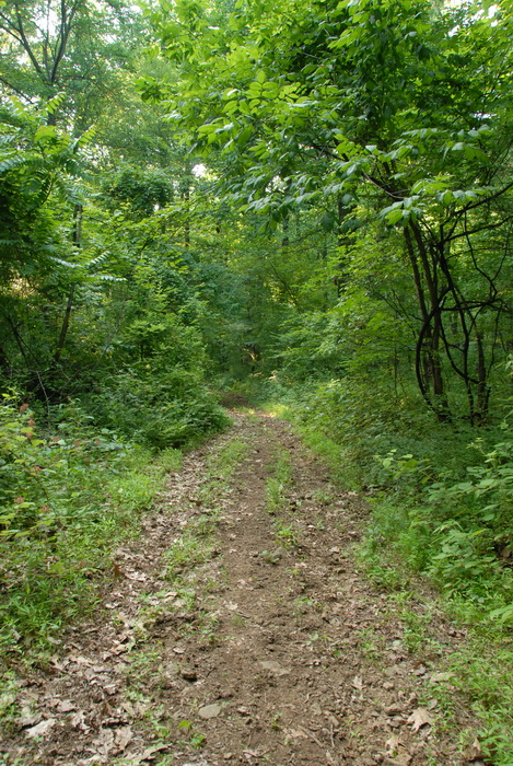 dirt path, dirt trail, ground cover, path, trail, trees, woods