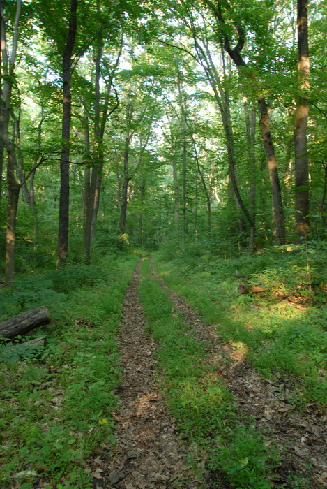 dirt path, dirt trail, ground cover, path, trail, trees, woods, fire road