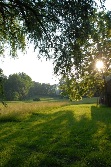 sunset, sun, trees, grass, field