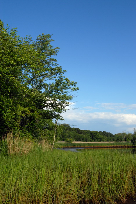 blue sky, grass, marsh, river, trees, water, My Favorite Pictures