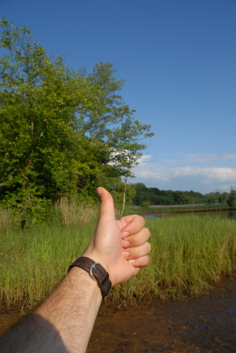 Thumbs across America, blue sky, grass, marsh, river, trees, water