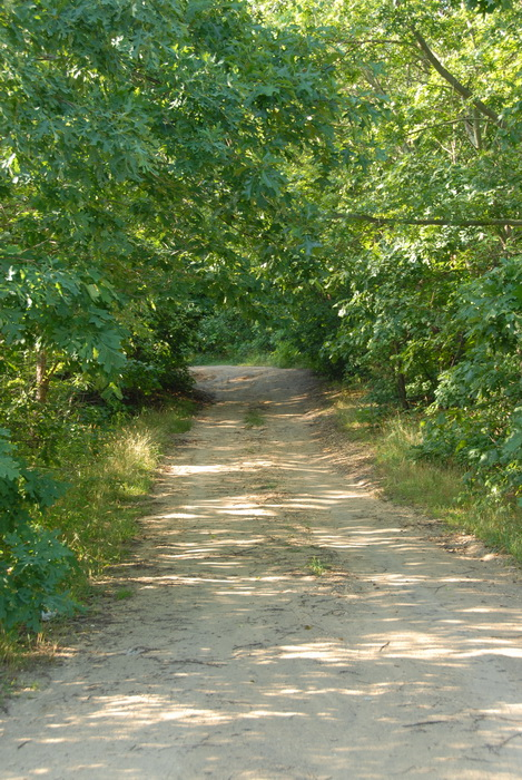 trees, dirt road, dirt path, under growth, grass