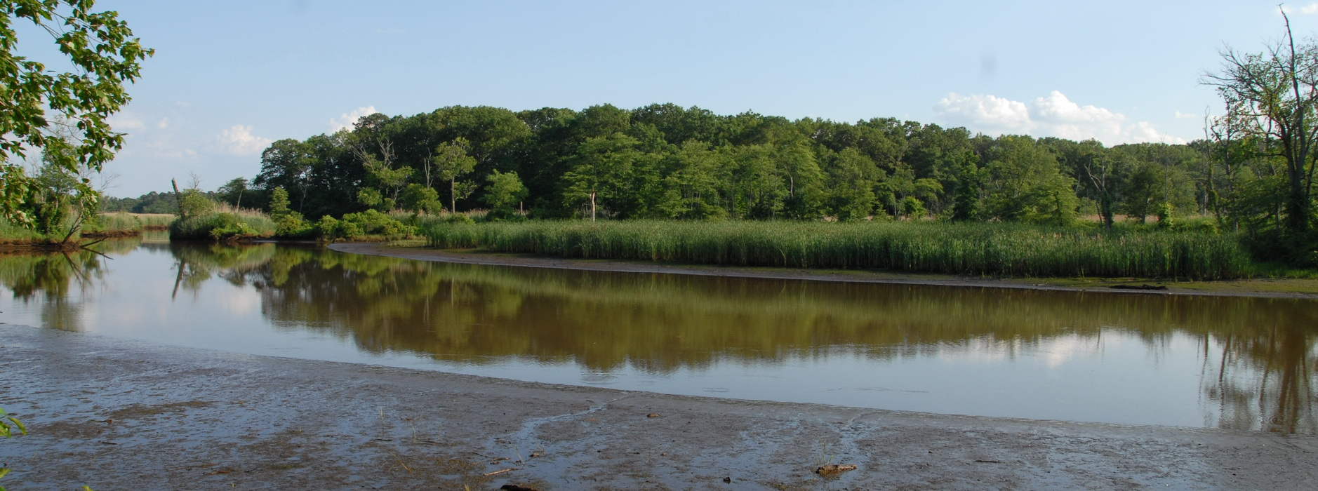 marsh, mudd, river, shoreline, trees, water