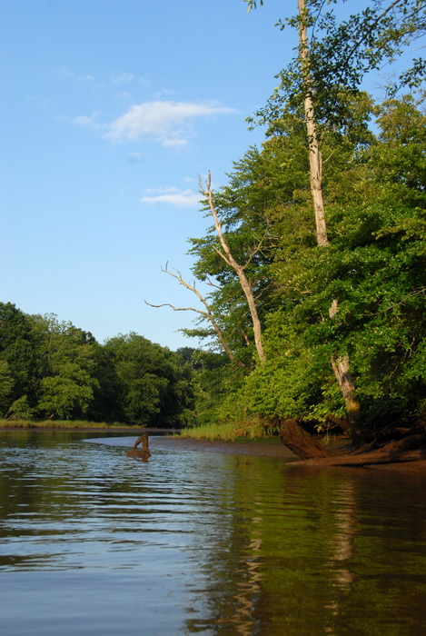 My Favorite Pictures, blue sky, mud, river, shoreline, trees, water