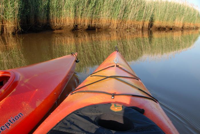 kayaks, rwater, river, reeds