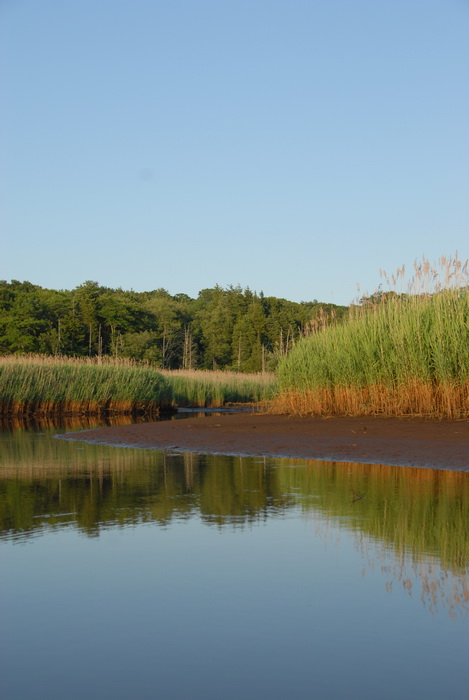 blue sky, ground cover, river, shoreline, trees, water