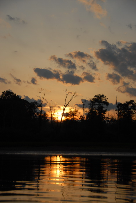 reflection, silhouette, sunset, trees, water