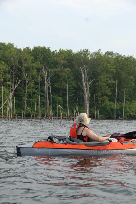 JSSKA, bird, dead trees, kayak, kayaking, lake, paddling, people, reservoir, trees, water