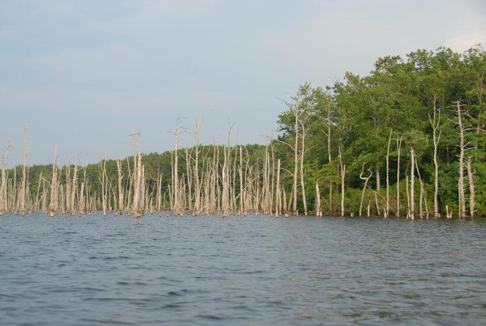 dead trees, lake, reservoir, trees, water