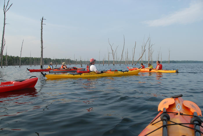 JSSKA, dead trees, kayak, kayaking, lake, paddling, people, reservoir, water