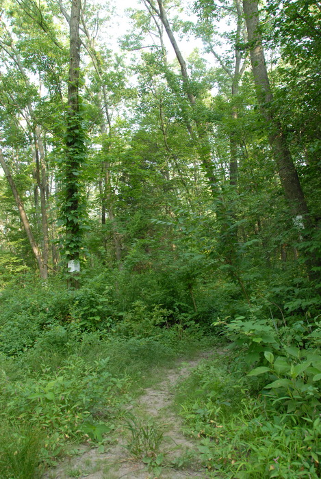 dirt path, dirt trail, path, trail, trees, woods