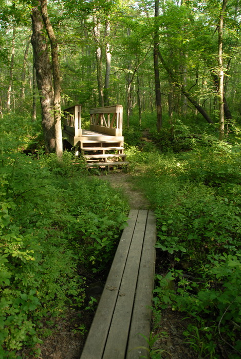 dirt path, dirt trail, ground cover, path, trail, trees, woods, wood bridge