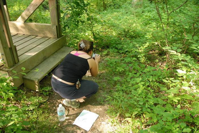 Danielle, wood bridge, dirt path, dirt trail, grass, ground cover, path, trail, trees, woods