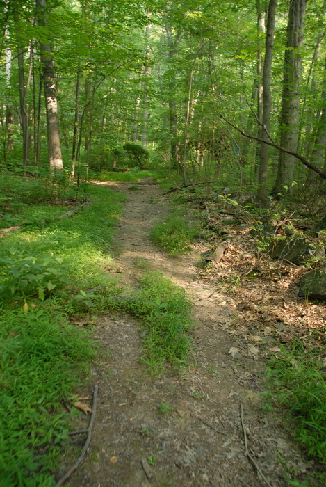 dirt path, dirt trail, ground cover, path, trail, trees, woods, grass