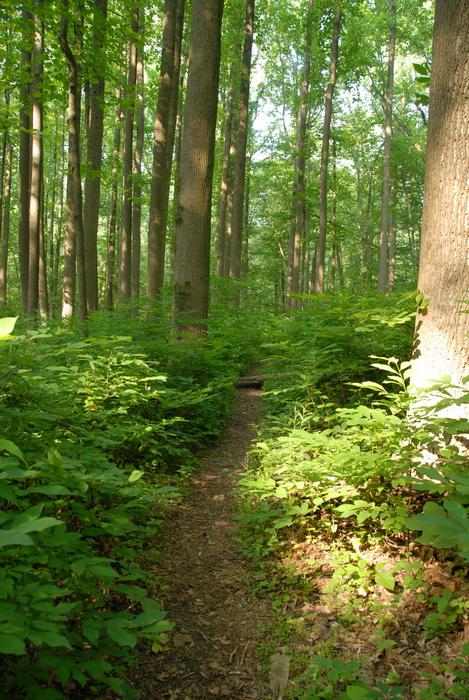 dirt path, dirt trail, path, trail, ground cover