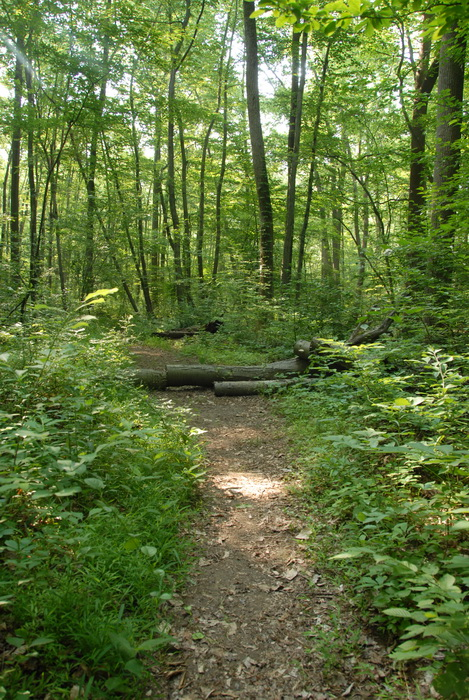 dirt path, dirt trail, ground cover, path, trail, logs