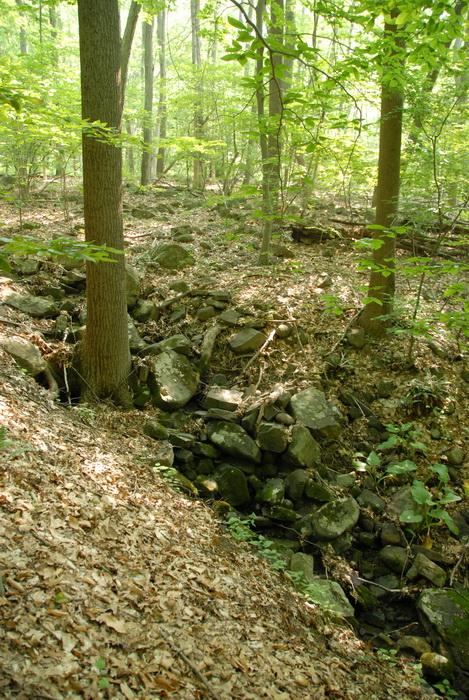 trees, woods, rocks, dried stream