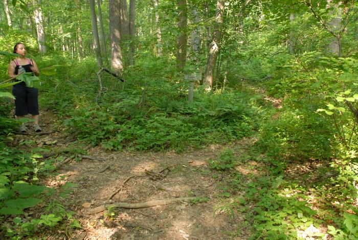 dirt path, dirt trail, ground cover, path, sign, trail, trail sign