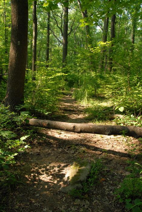 dirt path, dirt trail, ground cover, path, trail, log