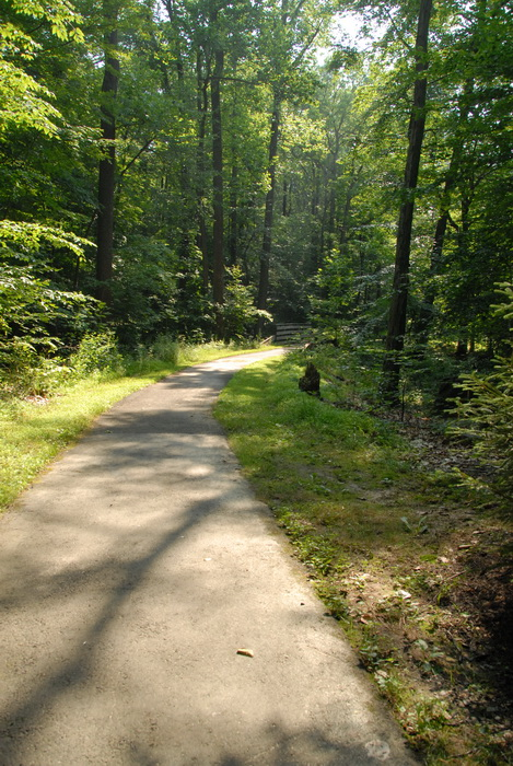 grass, paved path, woods, trees