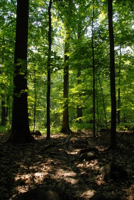 trees, woods, shade