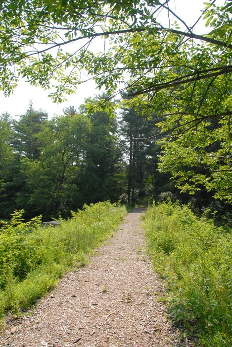 dirt path, dirt trail, ground cover, path, trail, grass