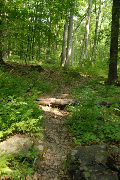 dirt path, dirt trail, ground cover, log, path, trail, rock