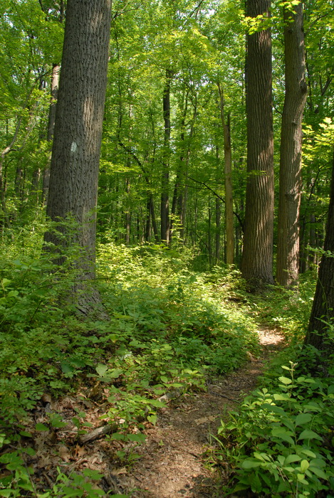 dirt path, dirt trail, grass, ground cover, path, trail, woods, trees