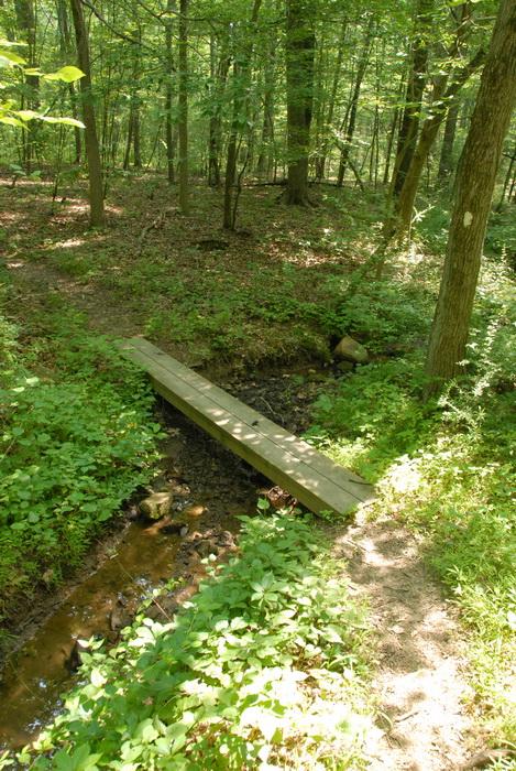 dirt path, dirt trail, grass, ground cover, path, trail, woods, trees, bridge