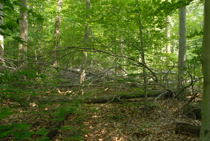 ground cover, tree, woods, fallen tree