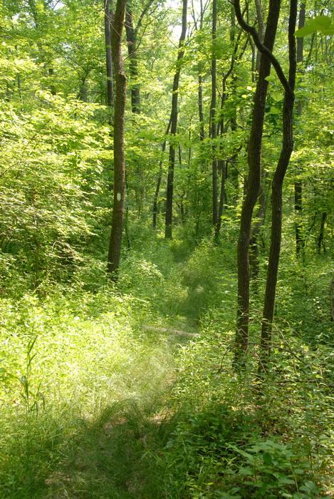 dirt path, dirt trail, grass, ground cover, over grown, path, trail