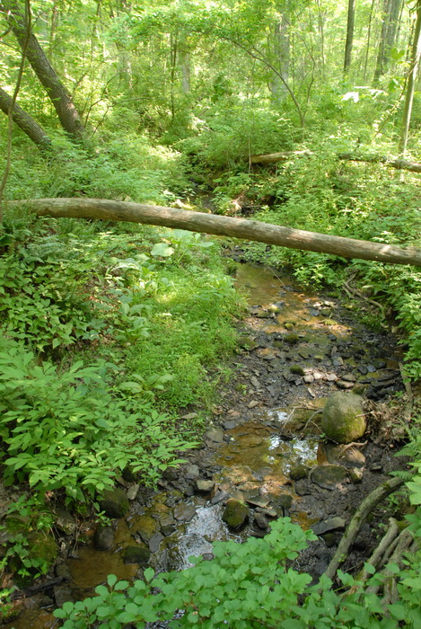 ground cover, woods, trees, water, stream, log