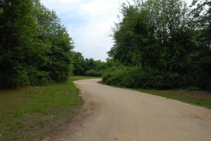 dirt, dirt road, grass, trees, turn