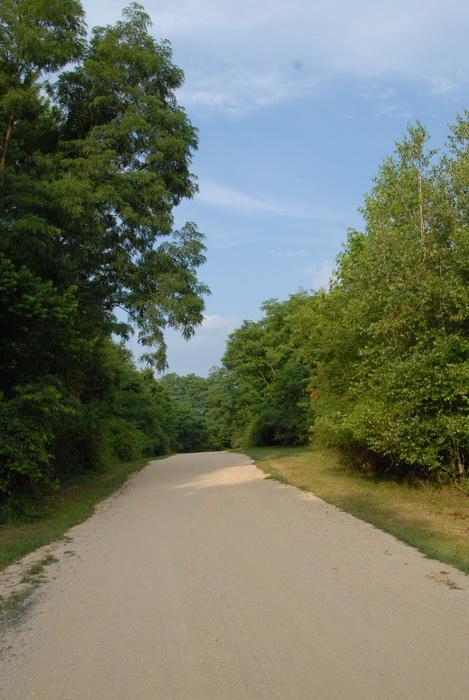blue sky, dirt, dirt road, grass, trees, turn