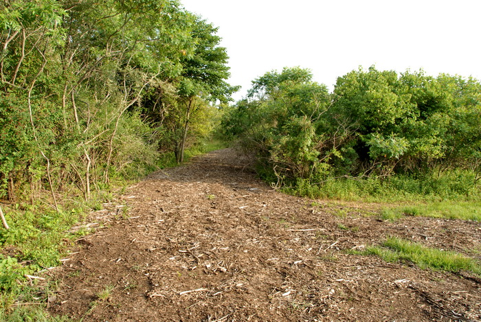 bushes, dirt path, grass, path, posts, trees, walkway, wood chips