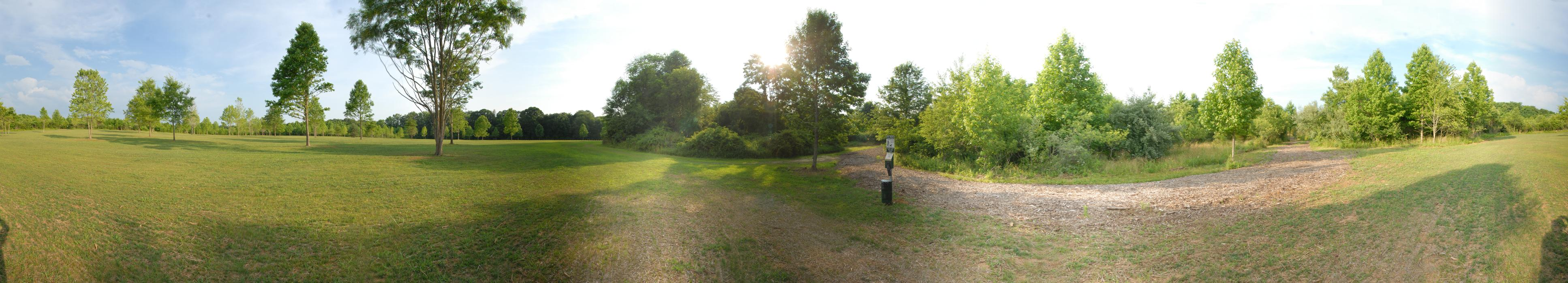 panoramic, field, grass, trees, path