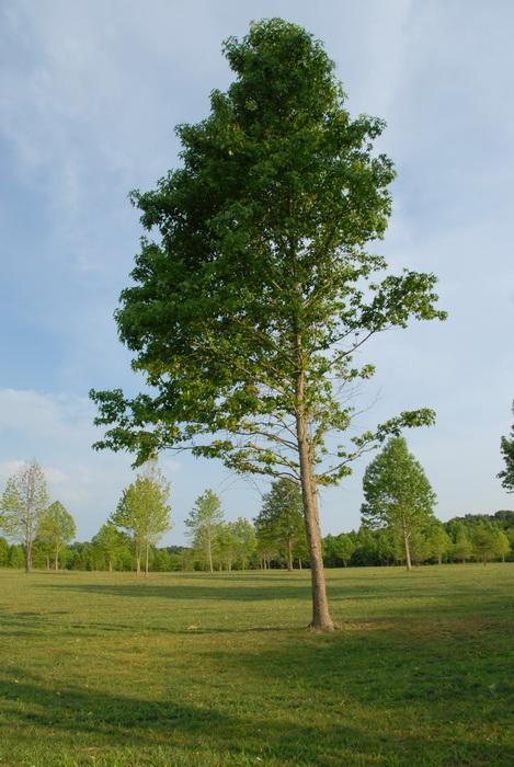 trees, field, grass