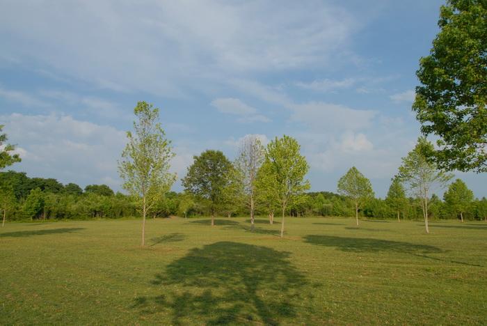 trees, fiel, grass