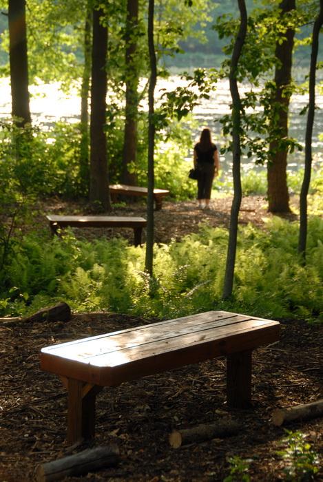 Jackie, Millhurst Mills Lake, benches, ferns, trees, water, woods