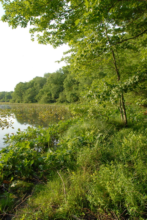 Millhurst Mills Lake, panoramic
