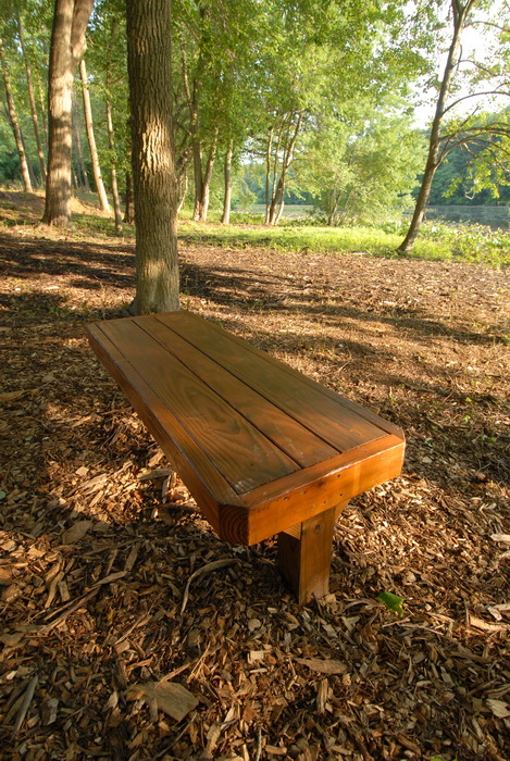 bench, trees, wood chips, woods