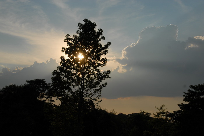 sunset, trees, clouds