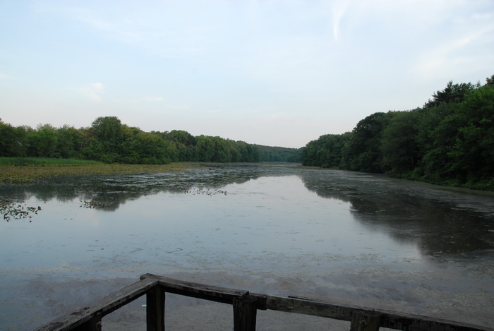 Millhurst Mills Lake, water, trees