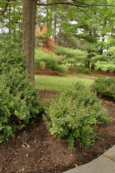 bushes, trees, grass, mulch