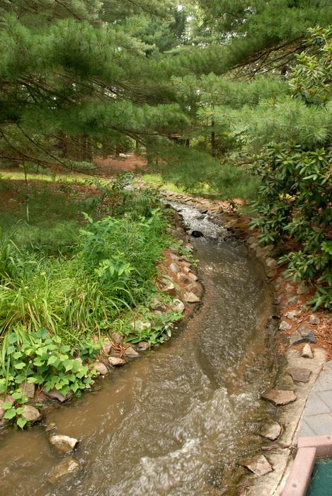 stream, water, grass, trees