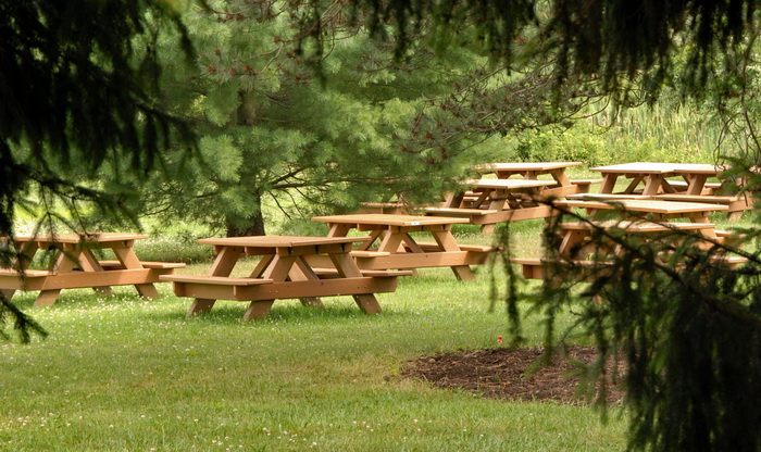 trees, grass, picnic tables