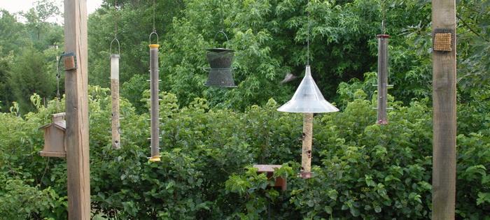 trees, gravel, wood poles, bird feeders, bushes, plants
